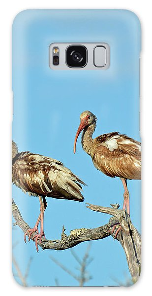 Perched White Ibises Galaxy Case by Bruce Gourley