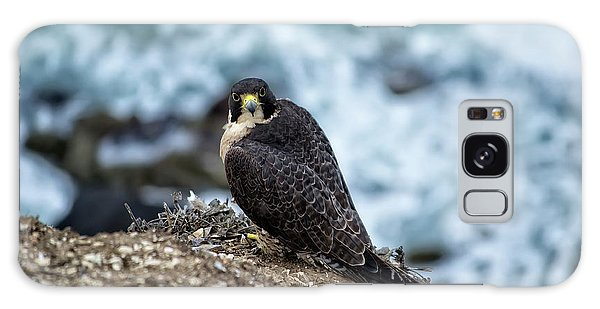 Peregrine Falcon - Here's Looking At You Galaxy Case