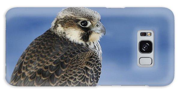 Peregrine Falcon Juvenile Close Up Galaxy Case