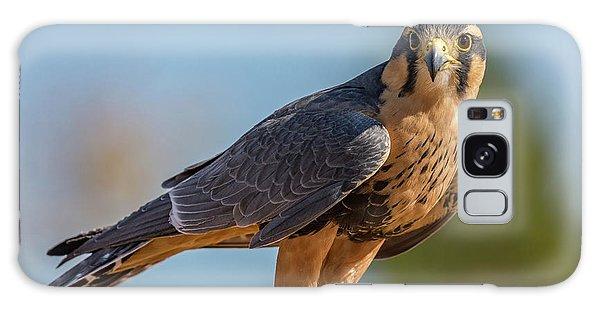 Peregrine Falcon Wildlife Art By Kaylyn Franks Galaxy Case