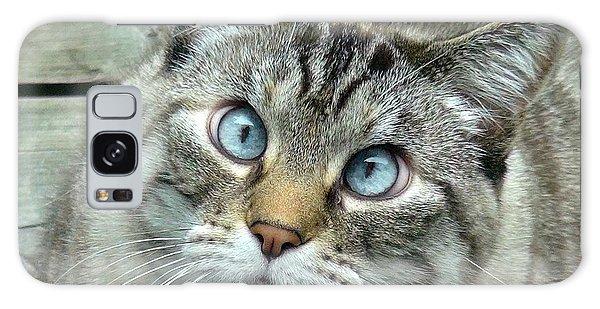 Pet Portrait - Lily The Cat Four Galaxy Case