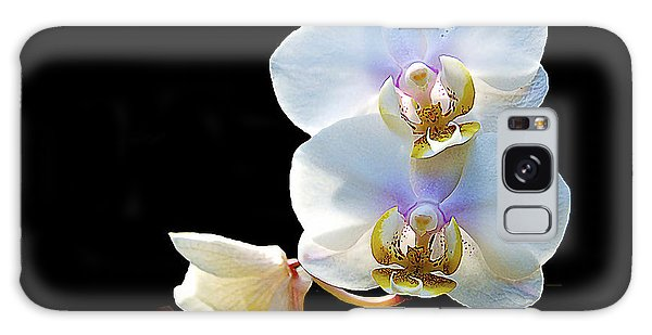 Phalaenopsis Culican #1 Nobby's Amy Shin Hua Galaxy Case