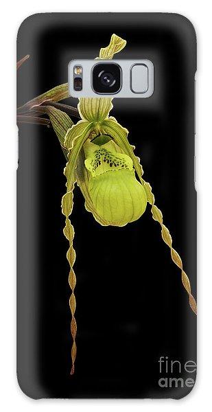 Phragmipedium Richteri Orchid Galaxy Case