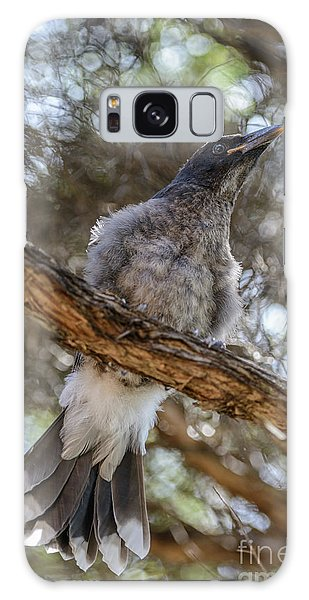 Pied Currawong Chick 1 Galaxy Case