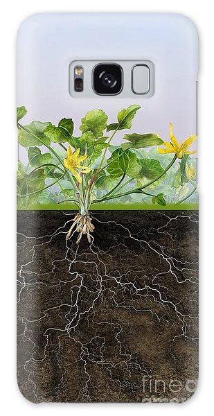 Pilewort Or Lesser Celandine Ranunculus Ficaria - Root System -  Galaxy Case by Urft Valley Art