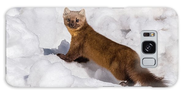 Pine Marten In Snow Galaxy Case by Yeates Photography