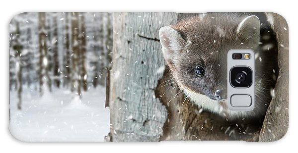 Pine Marten In Tree In Winter Galaxy Case