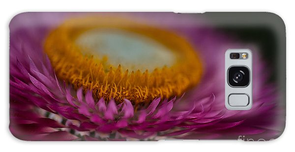 Pink And Yellow Strawflower Close-up Galaxy Case