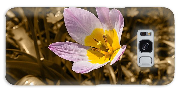 Pink And Yellow Tulip On Sepia Background Galaxy Case