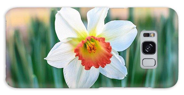 Pink Cup Solo Daffodil Galaxy Case