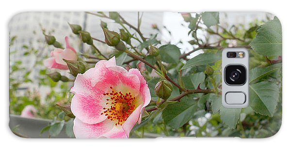 Pink Rose Of Tulsa Galaxy Case