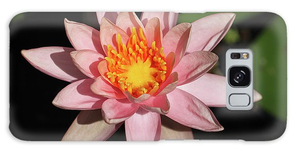 Pink Water Lily 2016 Galaxy Case by Suzanne Gaff