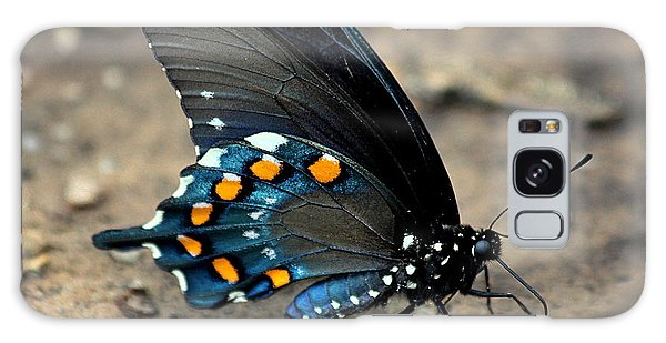 Pipevine Swallowtail Close-up Galaxy Case