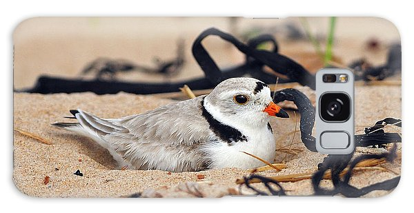 Piping Plover Galaxy Case