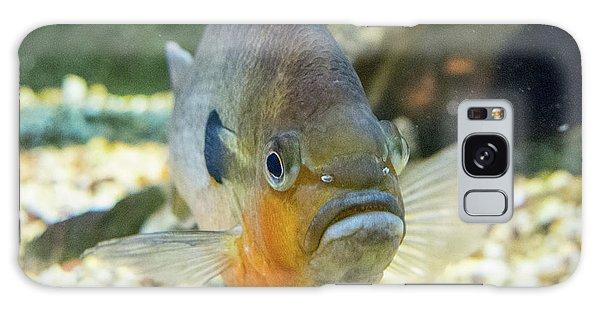 Piranha Behind Glass Galaxy Case