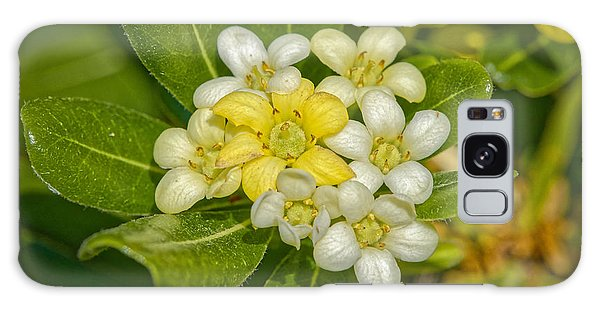 Pittosporum Flowers Galaxy Case