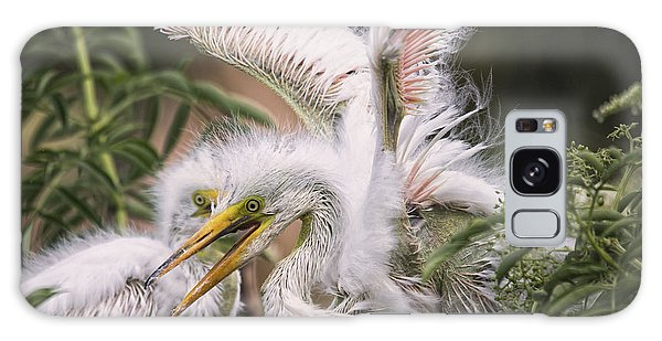 Playful Egret Chicks Galaxy Case