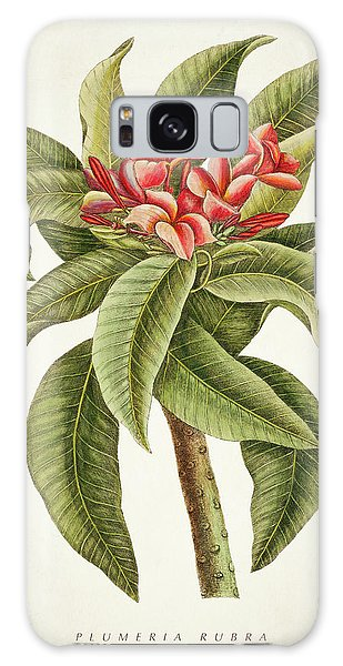 Botanical Garden Galaxy Case - Plumeria Rubra Botanical Print by Aged Pixel