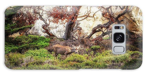 Point Lobos - Eden Galaxy Case
