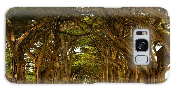 Point Reyes Cypress Tunnel Galaxy Case