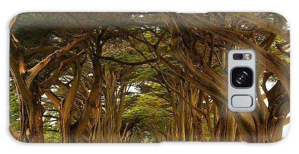 Point Reyes Cypress Tunnel Galaxy Case