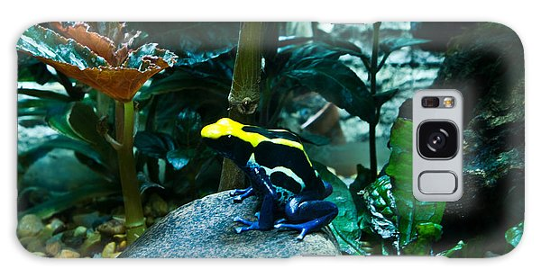 Poison Dart Frog Poised For Leap Galaxy Case