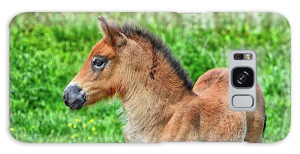 Pony Galaxy Case