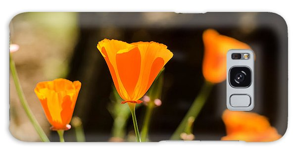 Poppies Along The Road Galaxy Case