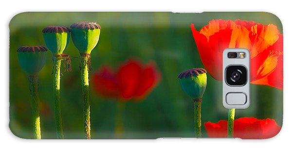 Poppies In Evening Light Galaxy Case