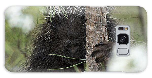 Porcupine Check-out Galaxy Case