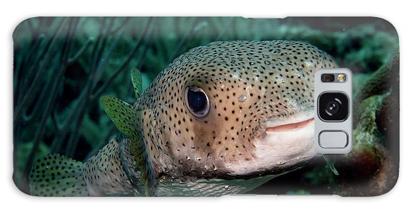 Porcupine Fish Galaxy Case