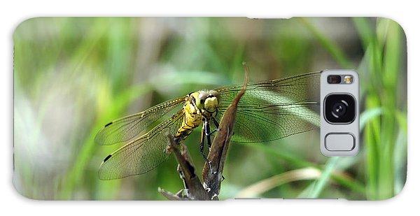 Portrait Of A Dragonfly Galaxy Case