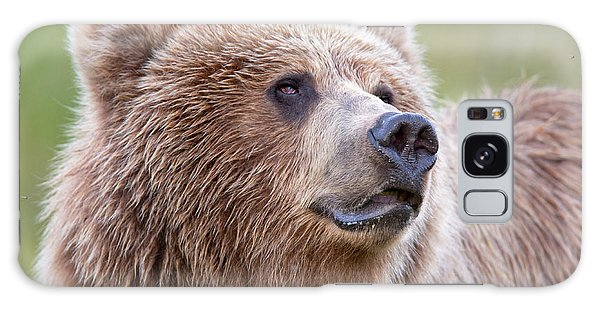 Grizzly Bears Galaxy Case - Portrait Of A Grizzly by Richard Garvey-Williams