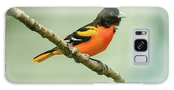 Portrait Of A Singing Baltimore Oriole Galaxy Case