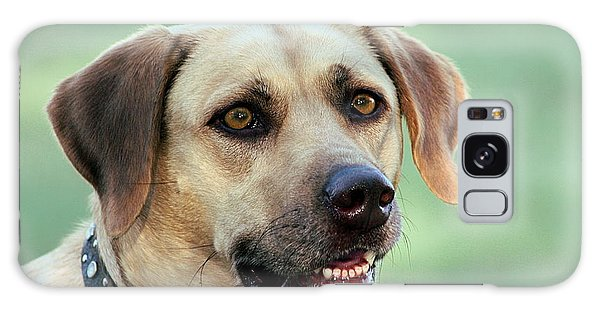 Portrait Of A Yellow Labrador Retriever Galaxy Case by Sheila Brown