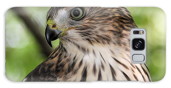 Portrait Of A Young Cooper's Hawk Galaxy Case