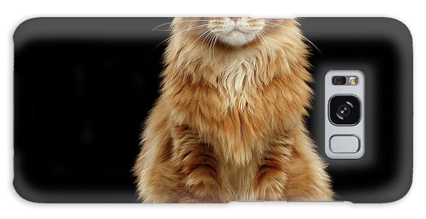 Portrait Of Ginger Maine Coon Cat Isolated On Black Background Galaxy Case