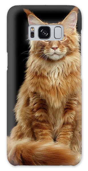 Cat Galaxy S8 Case - Portrait Of Ginger Maine Coon Cat Isolated On Black Background by Sergey Taran