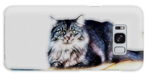 Portrait Of Maine Coon, Mattie Galaxy Case