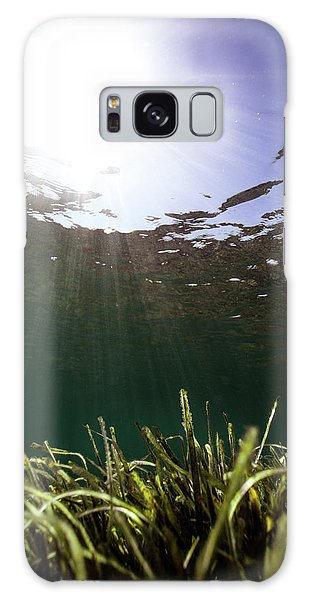 Posidonia Galaxy Case
