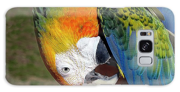 Preening Macaw Galaxy Case by Melissa Messick