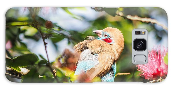 Red Cheeked Cordon Bleu Finch Galaxy Case