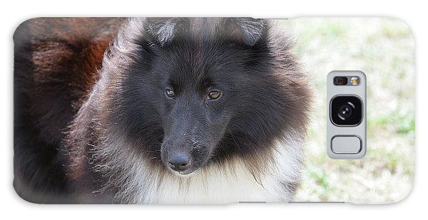 Pretty Black And White Sheltie Dog Galaxy Case