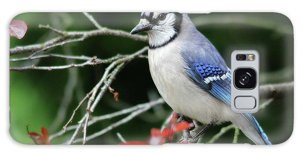 Pretty Blue Jay Galaxy Case
