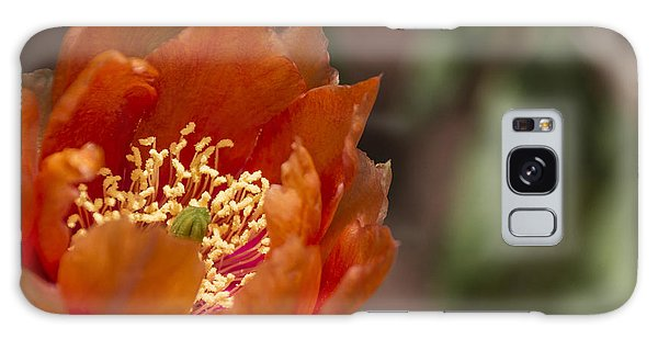 Prickly Pear Bloom Galaxy Case