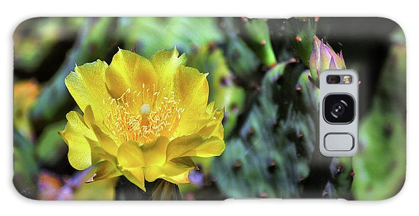 Prickly Pear Cactus Flower On Assateague Island Galaxy Case