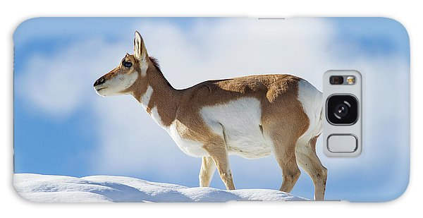 Pronghorn Doe On Snowy Ridge Galaxy Case