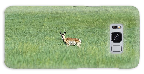 Pronghorn In A Sea Of Green Galaxy Case