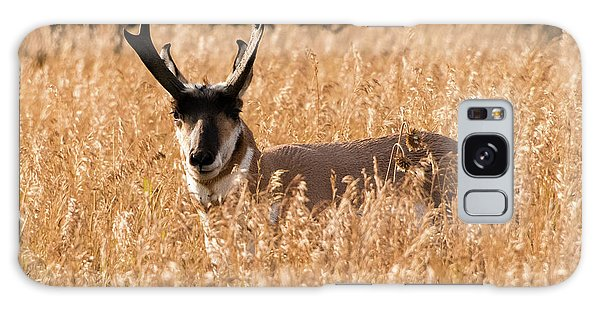 Pronghorn Galaxy Case