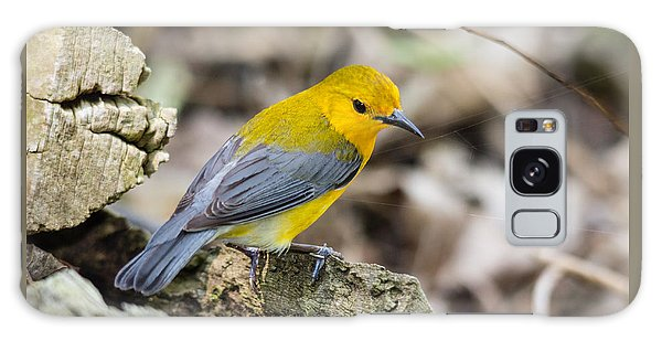 Prothonotary Warbler Galaxy Case